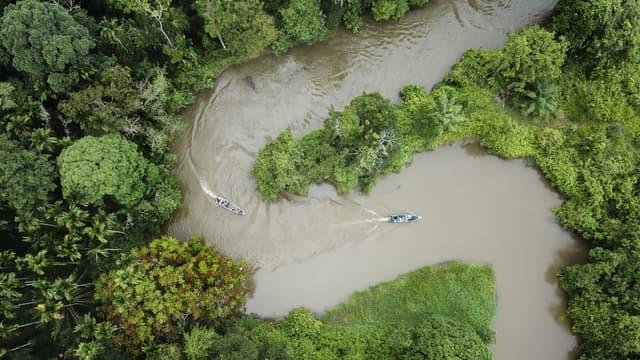 Forêt tropicale en Indonésie, le 12 janvier 2019