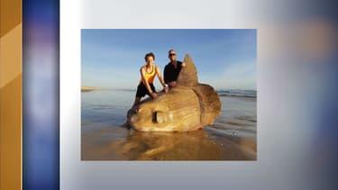 Une espèce rare de poisson lune échouée sur la plage australienne.