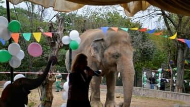 Ballons et musique avant le départ au Cambodge de l'éléphant Kaavan, le 23 novembre 2020 au zoo d'Islamabad