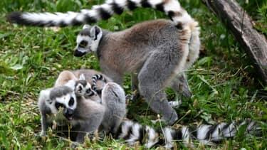 Le parc zoologique de Paris a rouvert ses portes après trois mois de fermeture le 8 juin 2020