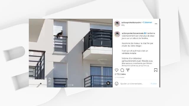 Un chat tombe du 3e étage après avoir été enfermé plus de deux jours sur un rebord de fenêtre.