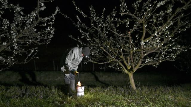 Un producteur de fruits allume une bougie pour préserver ses vergers du gel à Westhoffen le 6 avril 2021.