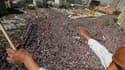 """Vue de la place Tahrir, au Caire, lors de la """"marche de la victoire"""" organisée vendredi, une semaine jour pour jour après la chute du président Hosni Moubarak, au pouvoir depuis 30 ans. Des millions d'Egyptiens ont participé à cette manifestation pour fêt"""