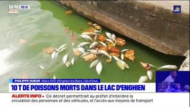 Dix tonnes de poissons morts à Enghien-les-Bains: comment éviter que cela ne se reproduise?