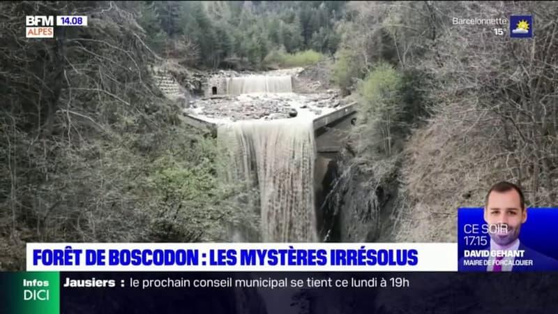 Accidents ou interventions criminelles? Une série de disparitions dans la forêt de Boscodon pose toujours question