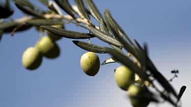 Des olives - Image d'illustration