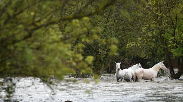Image d'illustration - Inondations à Aimargues, dans le Gard, mardi 14 septembre