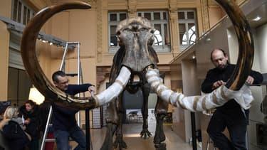 Un gigantesque squelette de mammouth a été vendu aux enchères.