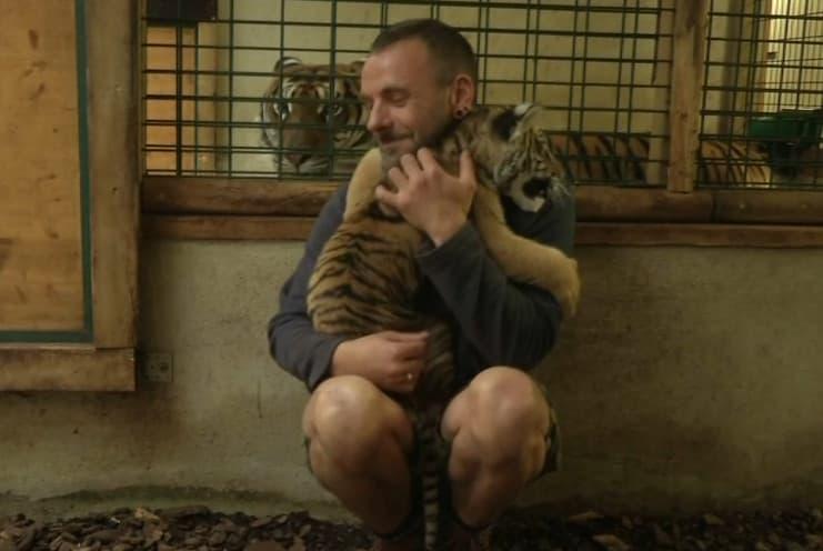 Le petit tigre est encore trop proche de l'homme