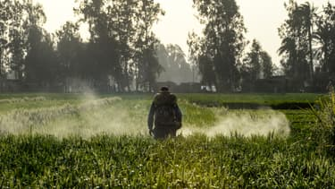 Un homme arrose un champ avec des pesticides (photo d'illustration)