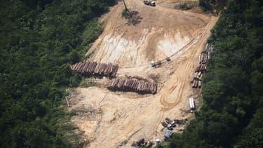 Une exploitation illégale de bois dans la forêt amazonienne au Brésil