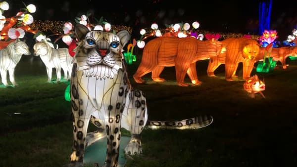 L'exposition lumineuse du zoo de Thoiry