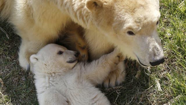 Née le 26 novembre 2014, la bébé ours et sa maman sont sorties pour la première fois ce 9 mars 2015