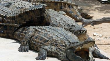 Un crocodile du Nil - Image d'illustration