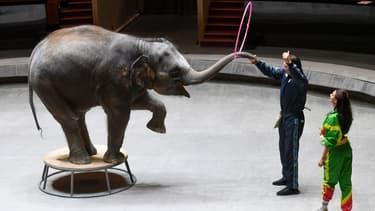 Un éléphant femelle au Grand Cirque d'État de Moscou le 18 janvier 2021. (Photo d'illustration)