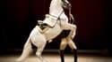 Un cheval lors du spectacle de la Spanish Riding School à Amsterdam, le 29 novembre 2014.