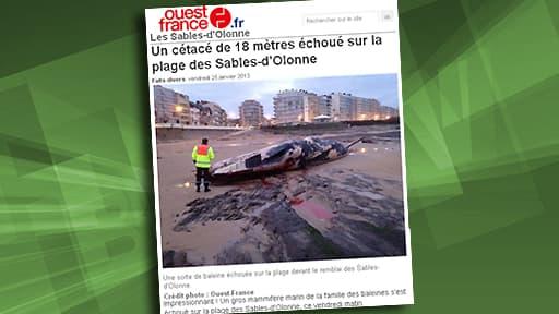 """Cette baleine, un rorqual selon les pompiers, s'est échouée sur la plage dite """"des Présidents"""""""