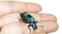 """Un scarabée """"piloté"""" par des hommes"""
