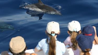 Un groupe de personnes regarde des dauphins nager au large de Nice, depuis le pont d'un bateau d'excursion (Photo d'illustration).