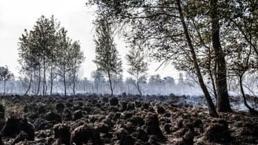 Le parc naturel de Deurnese Peel aux Pays-Bas, le 23 juin 2017