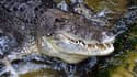 Un crocodile marin au zoo de Sydney, le 3 mars 2014. (photo d'illustration)