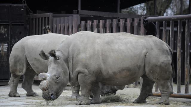 Nabire et à l'arrière plan Fatu au zoo de Dvur Kralove en 2009.