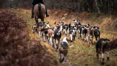 Image d'illustration d'une chasse à courre