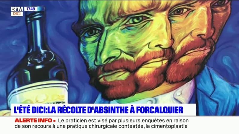L'été DICI : L'absinthe se récolte à Forcalquier