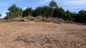 Vue du site de la forêt de Sivens, sur lequel le barrage doit être construit.