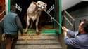 Le ministre français de l'Agriculture Bruno Le Maire a annoncé mardi un plan d'aide de 300 millions d'euros sur trois ans en faveur des éleveurs, qui subissent une hausse des coûts et de faibles prix de vente. /Photo d'archives/REUTERS/Benoît Tessier