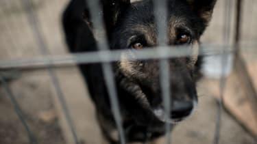 Près de 60.000 animaux sont délaissés durant l'été.