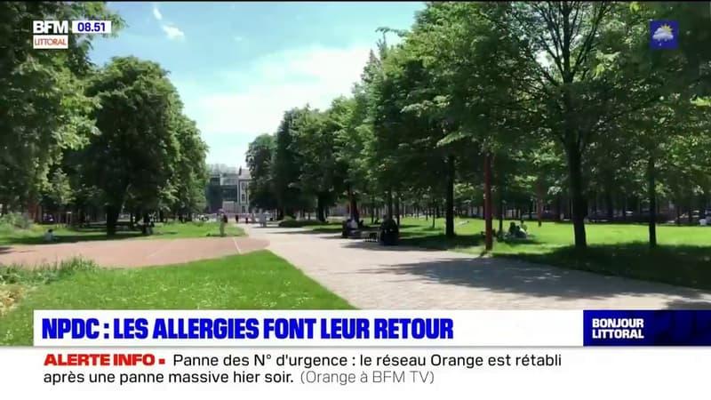 Nord-Pas-de-Calais: les allergies font leur retour