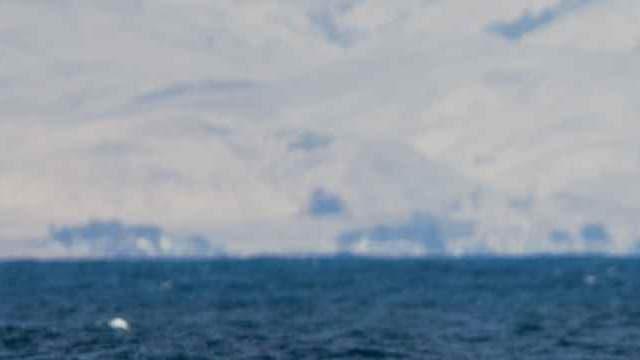 La queue d'une baleine bleue. (illustration)