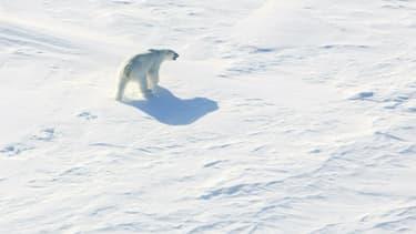 Un ours polaire sur la glace dans l'Arctique près du pôle Nord, le 21 avril 2015