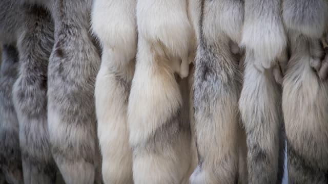 Des fourrures animales exposées lors d'un salon dédié à Moscou, en 2017. (photo d'illustration)