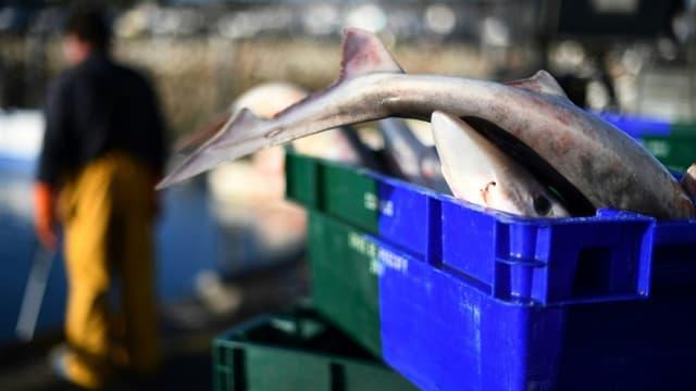"""Santé publique France annonce que """"la consommation de poissons et de produits de la mer influence les concentrations en arsenic, chrome, cadmium et mercure"""", et recommande d'en manger deux fois par semaine."""
