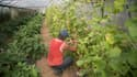 Un agriculteur travaillant dans une ferme du Var (illustration).