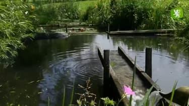 Label Flandre - Le jardin d'eau et de poésie