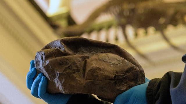 Le premier œuf fossile découvert en Antarctique, le plus gros œuf à coquille molle et le deuxième plus gros œuf jamais découvert