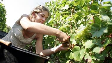 Ce marché représente 5,2 milliards d'euros de recettes par an, les vignobles les plus fréquentés étant celui de Bordeaux, la Champagne, l'Alsace, la Bourgogne et le Val de Loire.
