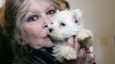 """Brigitte Bardot appelle """"ceux qui aiment les animaux"""" à ne pas voter Macron."""