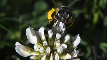 CLCV demande aux pouvoirs publics le renforcement des contrôles et la suppression des espaces libre-service avec au minimum une mise sous clé obligatoire de tous les pesticides.