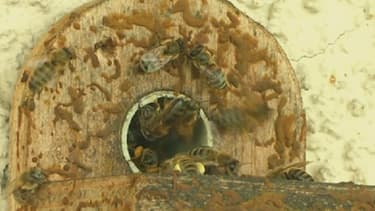 Les abeilles participent à 80% de la reproduction des espèces végétales dans le monde.