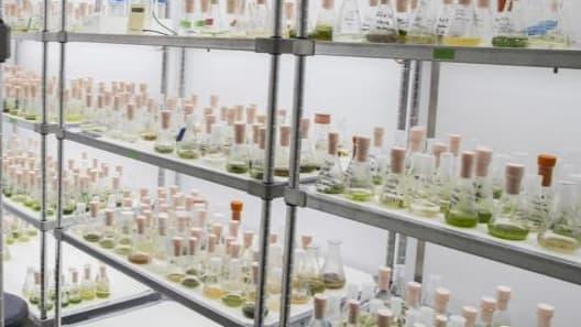 La start-up Algama va bientôt commercialiser sa boisson à base de spiruline sur laquelle elle a travaillé en laboratoire durant 2 ans