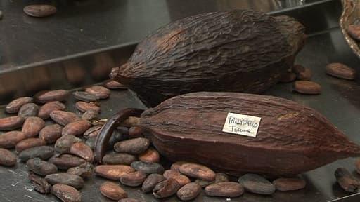 Le cacao pourrait devenir un produit rare dans quelques années.