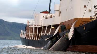 L'Islande et la Norvège défient un moratoire de la Commission baleinière internationale (CBI) sur la chasse à la baleine à des fins commerciales.