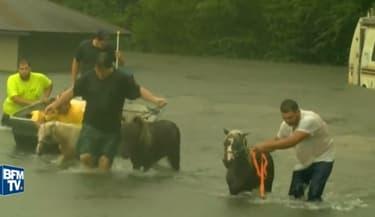 Les secours sont aussi venus à la rescousse de centaines d'animaux en Louisiane