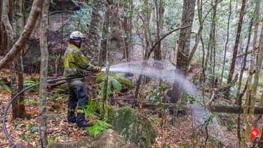 Un pompier arrose un pin de Wollemi, dans le cadre d'une opération secrète pour sauver ces arbres millénaires, en Australie, le 22 décembre 2019