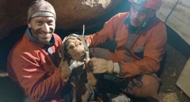 Depuis sa chute samedi au cours d'une partie de chasse, le teckel de 6 ans était coincé au fond d'un aven obstrué par une pierre.
