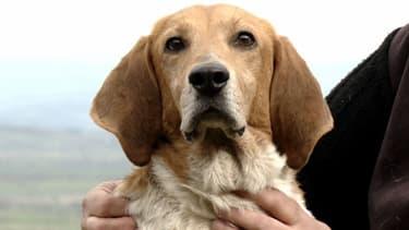 Le chien Diabolo va bien mieux, depuis le mois d'octobre il est en famille d'accueil grâce à la SPA et 30 millions d'Amis.